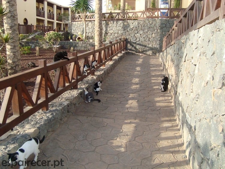 Gatos no Hotel Barceló Jandía Mar