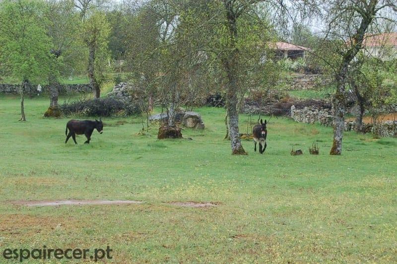 Rota da Terra Fria Transmontana - Escapadinha de Primavera